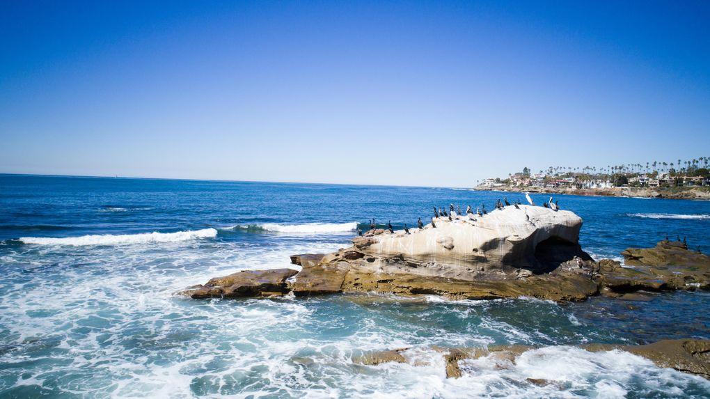 5680 Dolphin Pl La Jolla Ca 92037 Home For Rent Realtor Com