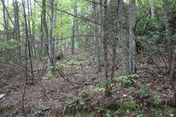 laurel bloomery Find the best hiking trails in laurel bloomery tn laurel bloomery tennessee hiking trails map great hiking trails in laurel bloomery tn.
