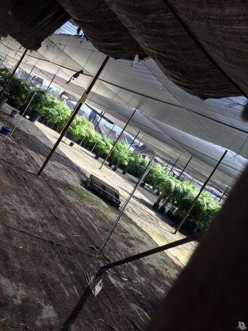 763 Peres Ln, Santa Paula, CA 93060