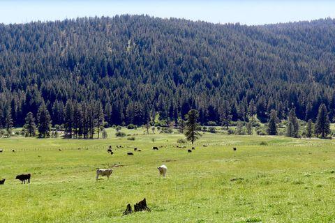 New meadows zip code