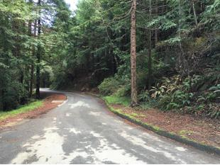 Mill Valley, CA Patch - Breaking Local News Events Schools ...