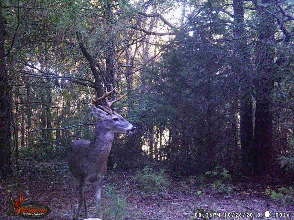 1239 County Road 2117, Douglassville, TX 75560