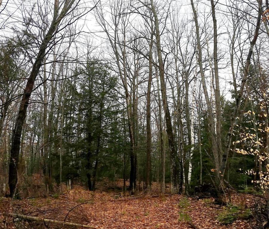 algonquin dr lot 146 glennie mi 48737 land for sale and real estate listing
