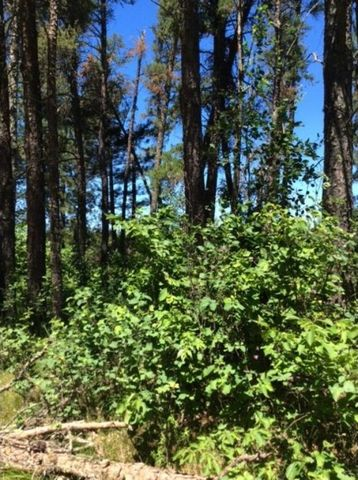 Photo of Bunny Hill Rd, Orton Township, MN 56477