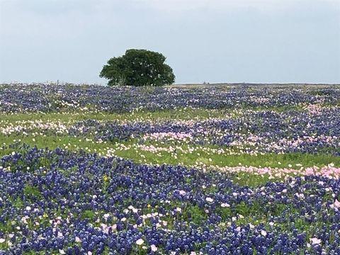 Photo of 7909 Warmke Rd, Bleiblerville, TX 78931