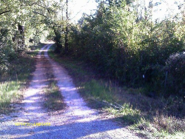 County Road 2, Wilcox County, AL 36751