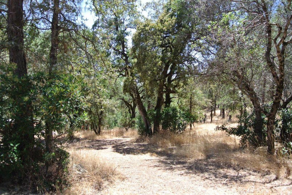 2 McKeon Ponderosa Way Foresthill, CA 95631