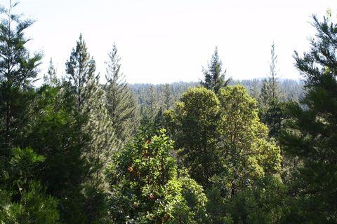 5040 Bear Creek Rd, Garden Valley, CA 95633