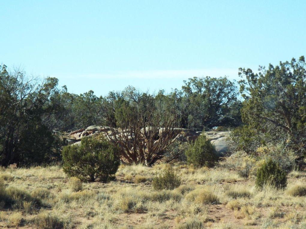 County 5270 Rd Lot 12, Concho, AZ 85924