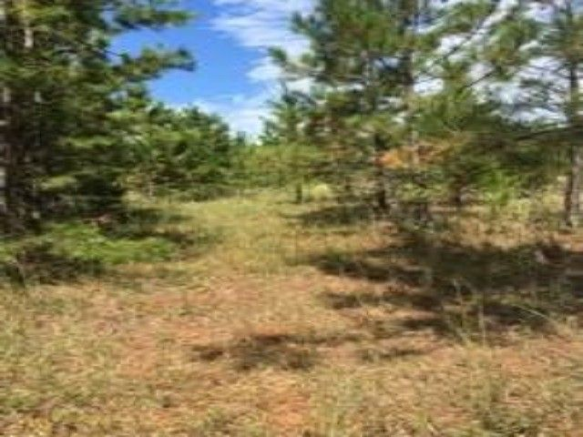 County Road 454, Kirbyville, TX 75956