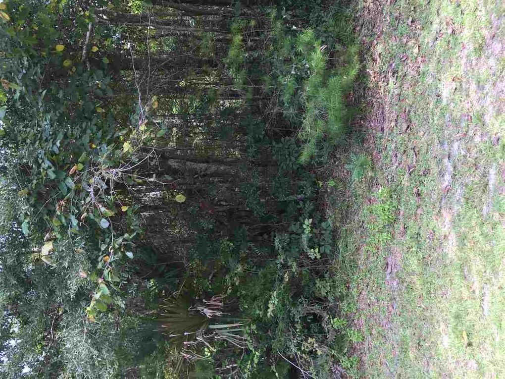 Chippewa Rd Lot 44 Crawfordville, FL 32327
