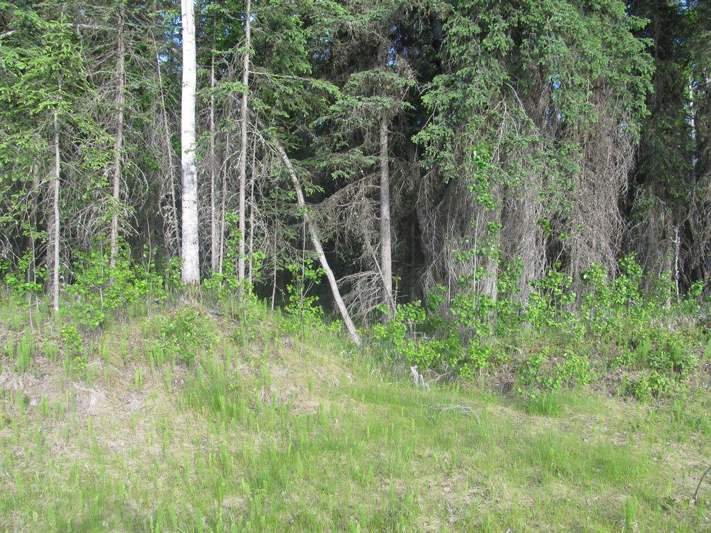 L4 B3 Lumberjack Ln, Soldotna, AK 99669