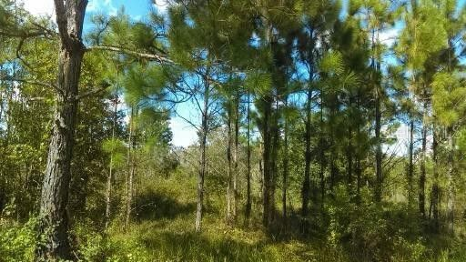 Water Rd, Clermont, FL 34714