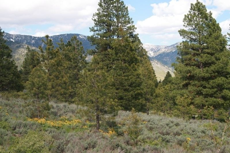 Lowman Idaho Property For Sale