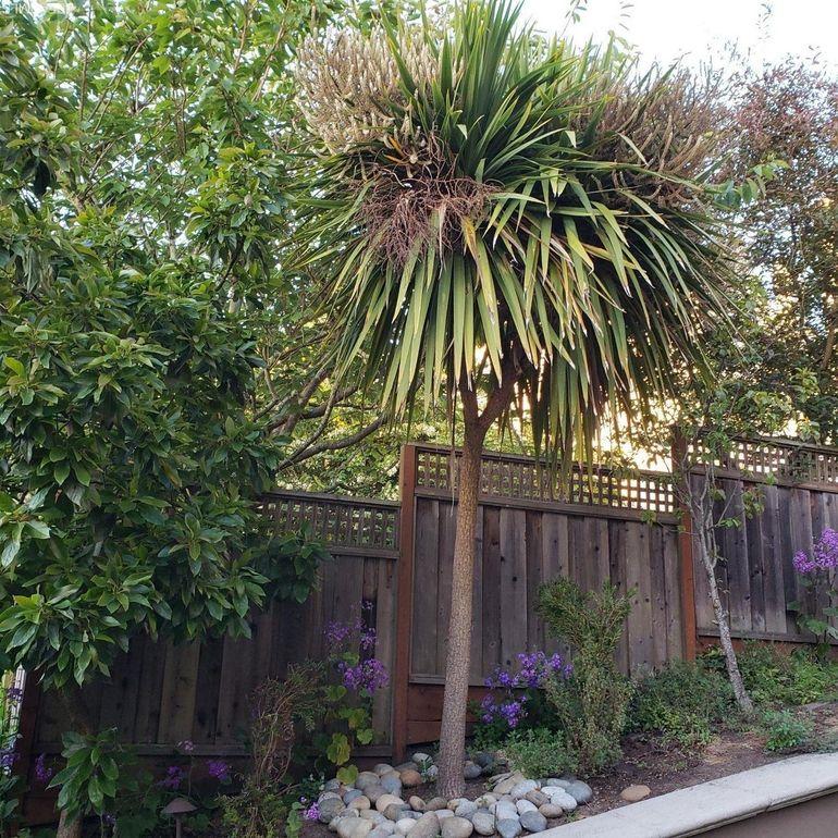 Apartment Rental Agency San Francisco: 250 Santa Paula Ave, San Francisco, CA 94127