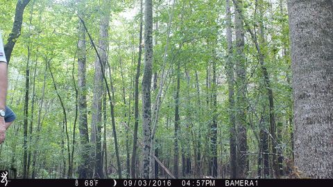 Photo of 12 Us # 264, Pantego, NC 27860