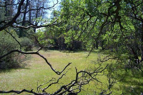 Photo of Merrilea, Millville, CA 96062