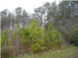 Photo of 1 Crandall Ac Dr Unit 40, Springville, AL 35146