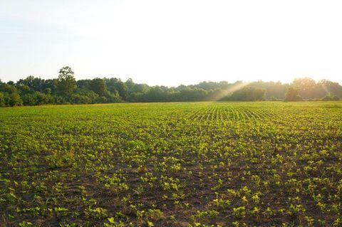 Photo of Cochran Rd, Greenfield, TN 38230