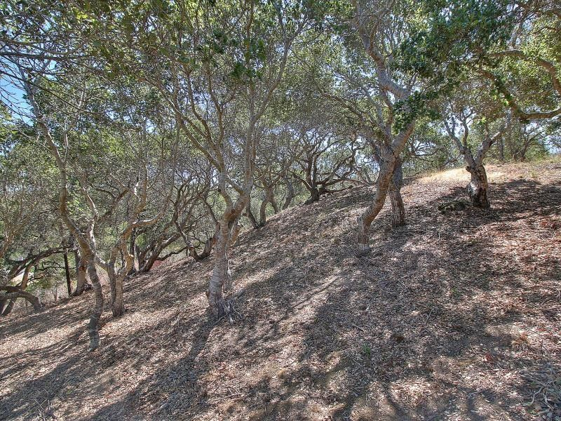 Ralston Ranch Rd Belmont, CA 94002
