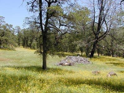 Photo of Mccandless Gulch, Round Mountain, CA 96084