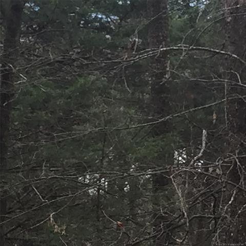 Photo of K Trl, Whitesboro, OK 74577