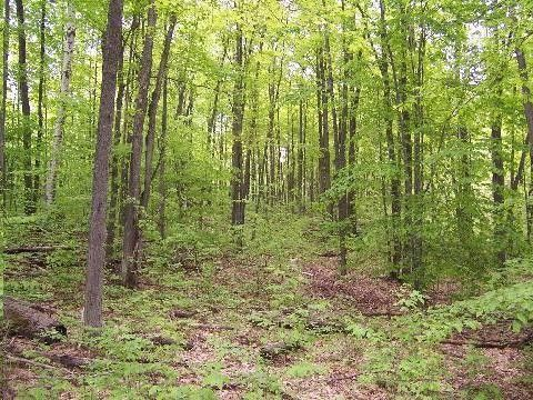 alcona county dating A hole in the forest as my road popped out of the woods briefly while cruising through alcona county and stone lance-heads dating to 9000 bc have been.