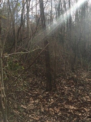 Photo of 14 4 Acres Jay Wilson Rd, Old Fort, TN 37362