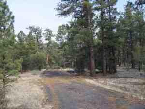 off county road 2315 nutrioso az 85932 land for sale and real estate listing
