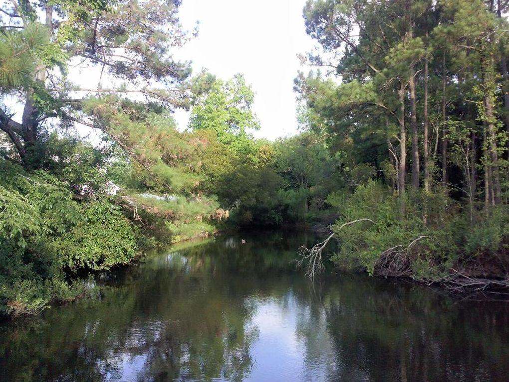 1583 Hatteras Sound, Mount Pleasant, SC 29464