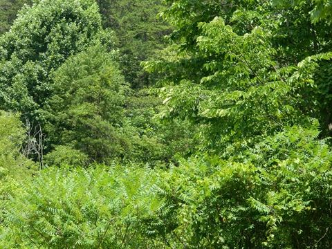 Tract 6 B Sloane Br, Sitka, KY 41255