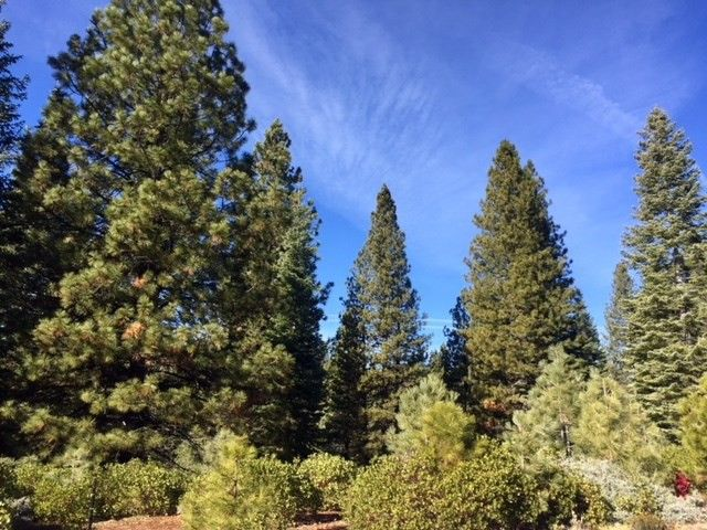 216 Fox Crest Dr Lot 123, Lake Almanor, CA 96137