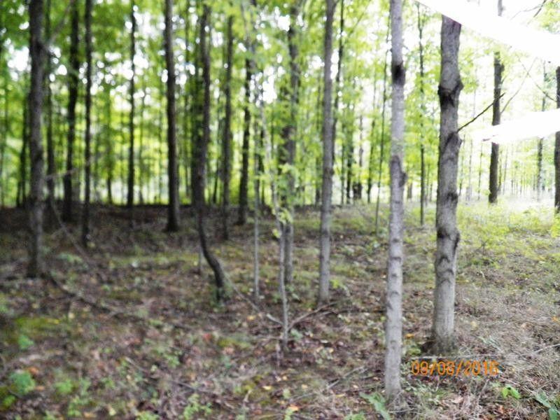 Lake Pleasant Attica Mi Property For Sale
