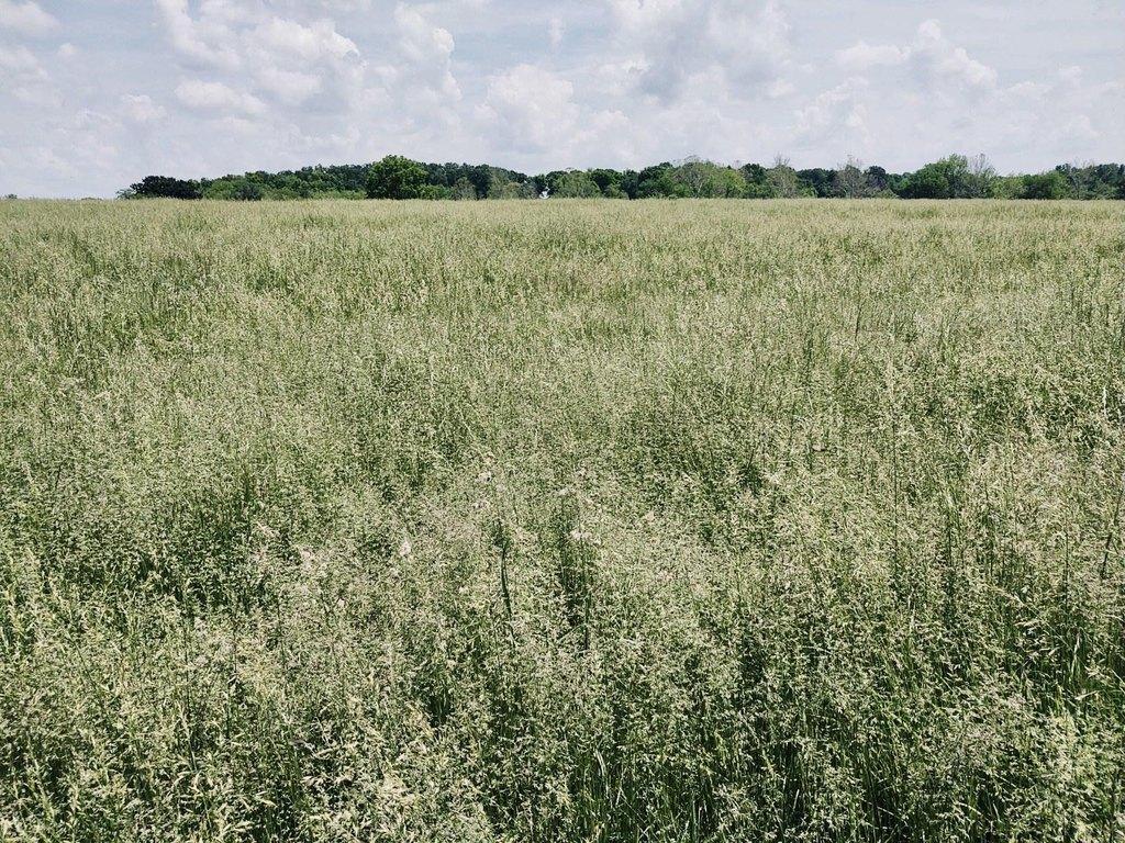 Farm land featured at E 1750 Rd, Fair Play, MO 65649