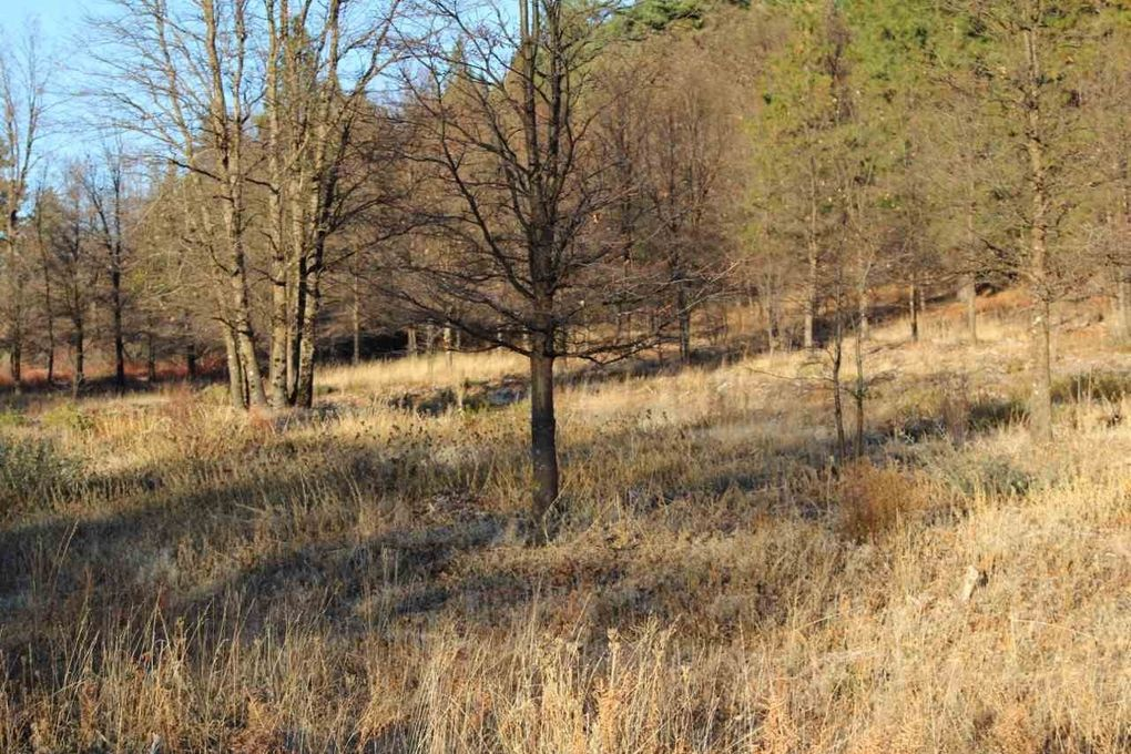 Lower Spring Hill Rd Lot 2 Mt Shasta Ca 96067