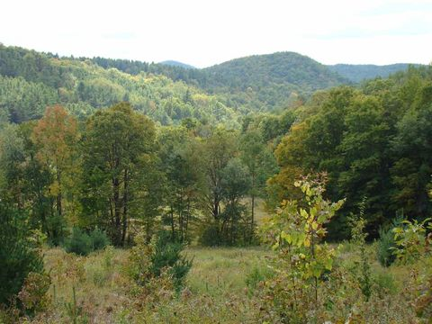 Image result for poultney vermont forest
