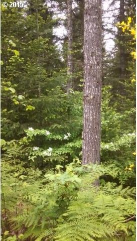 fisk rd unit 2 noti or 97461 land for sale and real