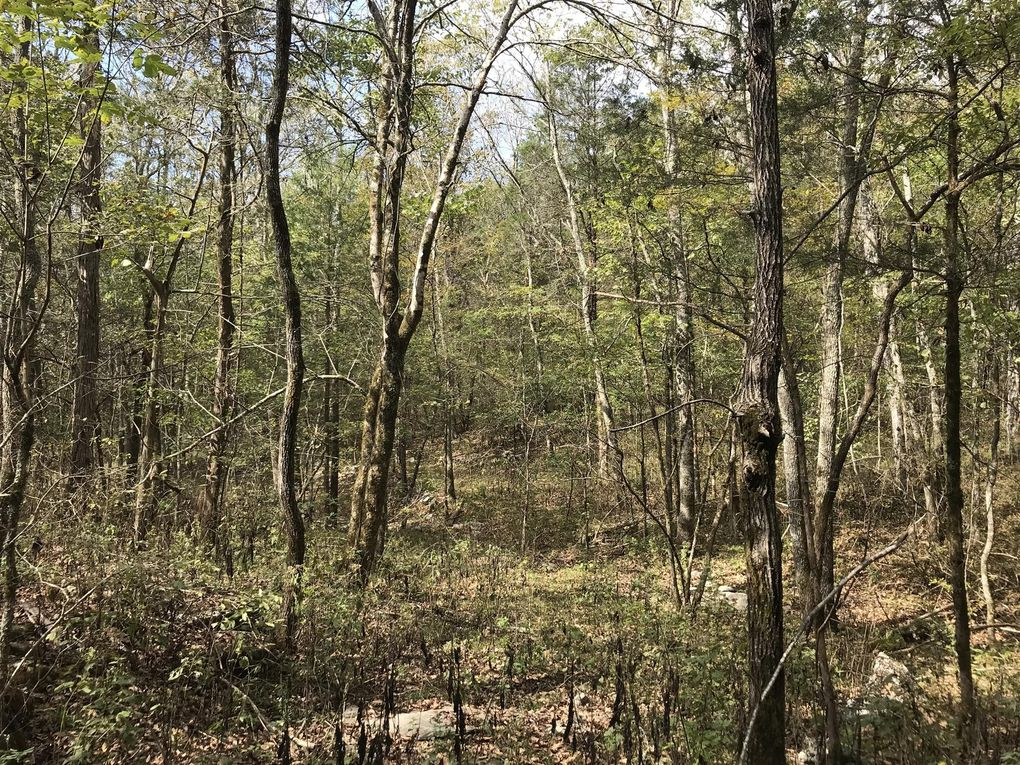 Francisco Rd Huntland Tn 37345 Land For Sale And Real Estate