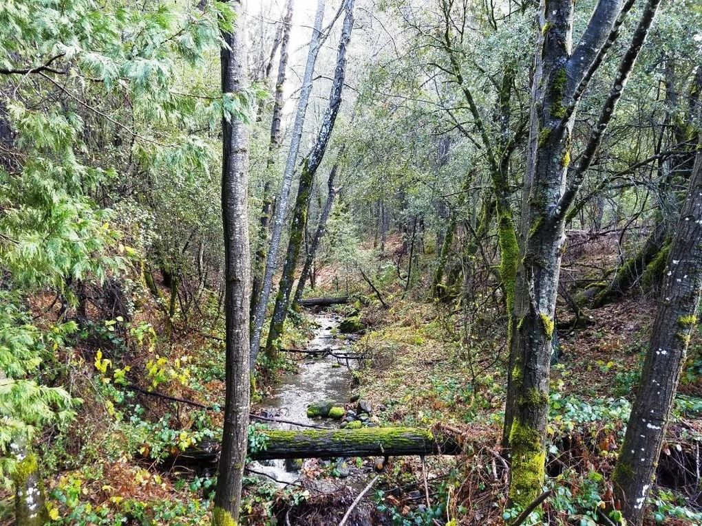 155 Acres Dickerson Rd Whitmore, CA 96096