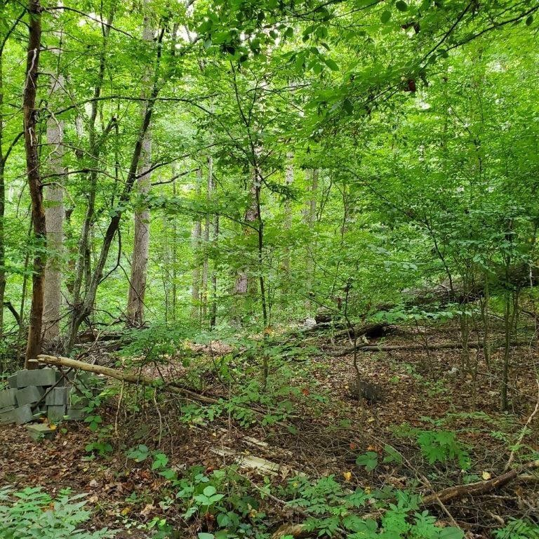 Mountain Trail Ct Lot 1326 Gainesville, GA 30506